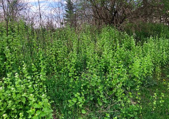 Growing Native Plants to Restore Habitat