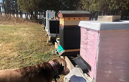 Planting Nectar Sources and Habitats for Honey Bees
