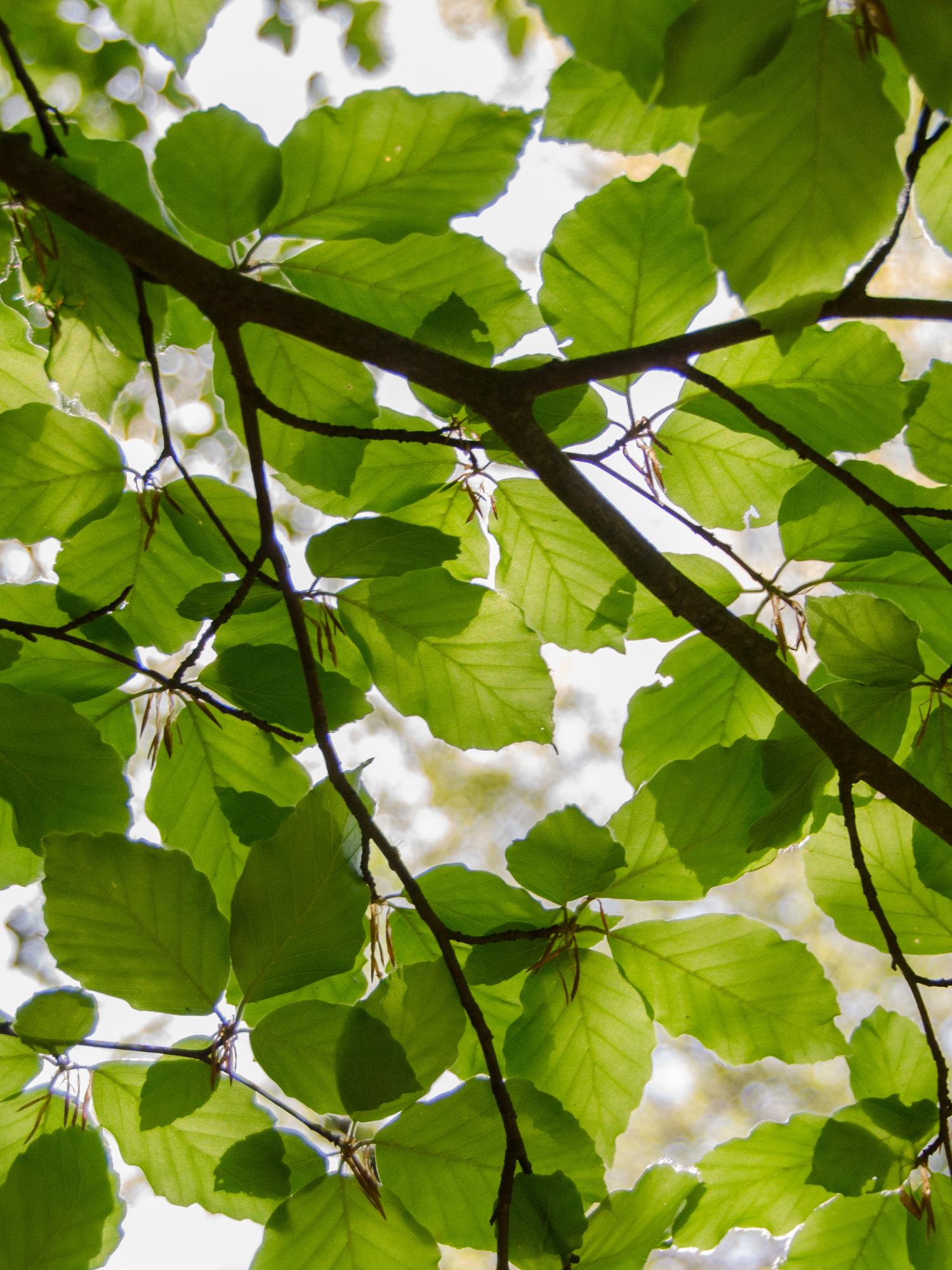 Tree, Shrub, & Perennial Care