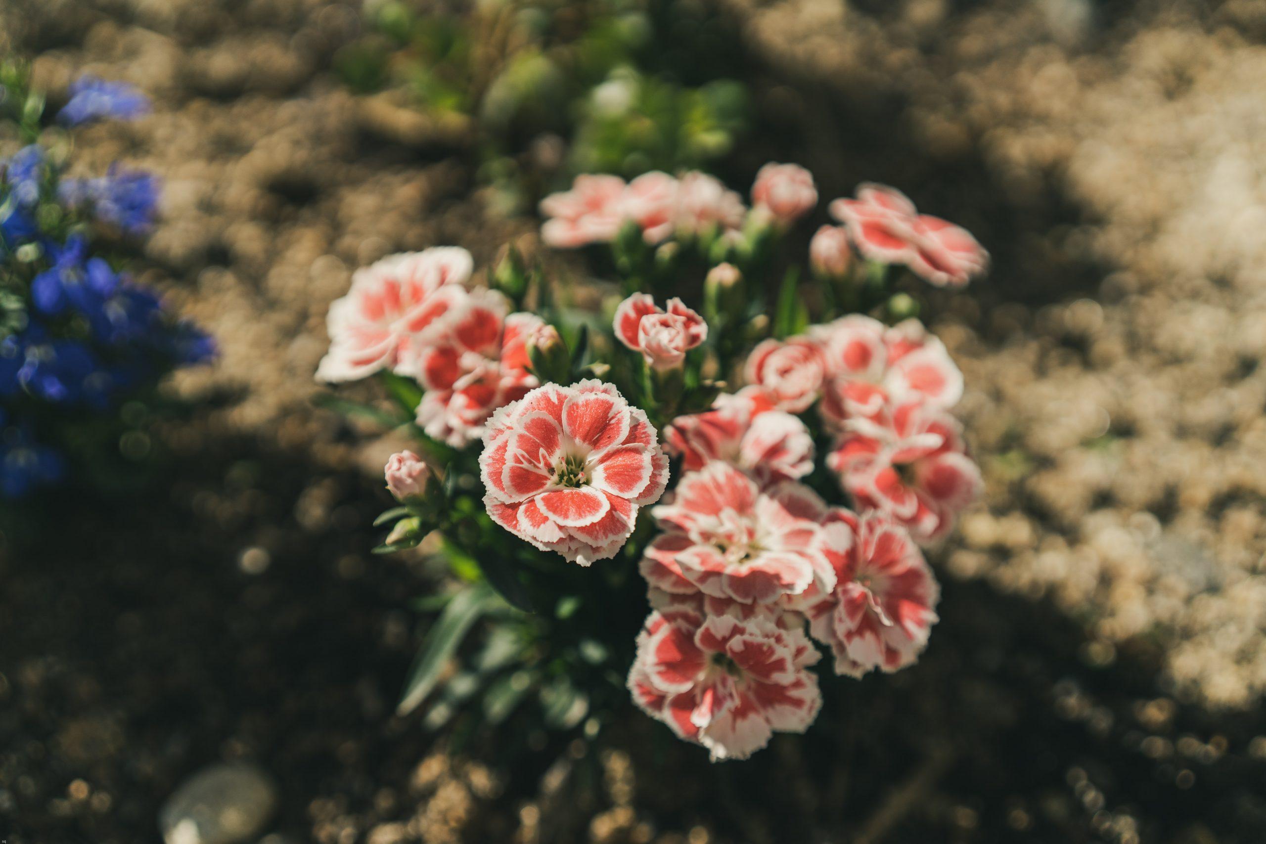 Floral Landscape Design